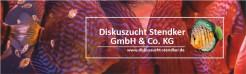 Lista de Discus Stendker para encomenda até dia 2 de Dezembro quarta-feira pelas 18h.