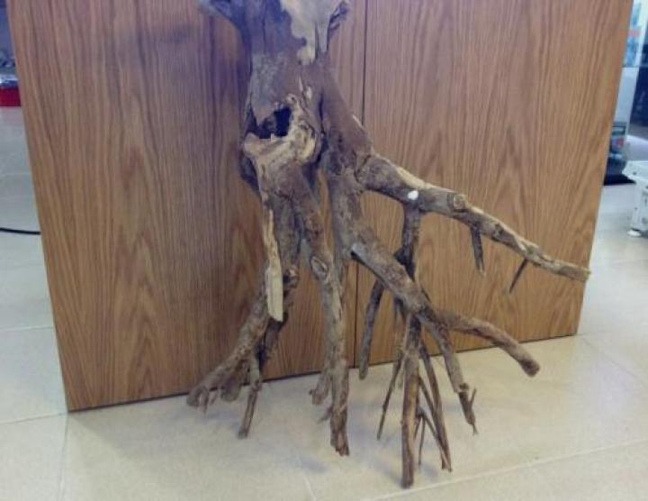 Tronco Talawa Wood - Mangle 1 Kg
