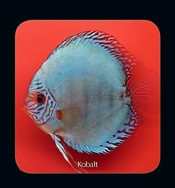 Discus  Kobalt 6.5cm