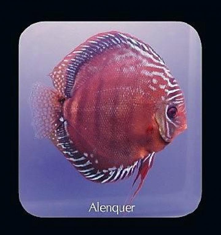 Discus  Alenquer 10cm