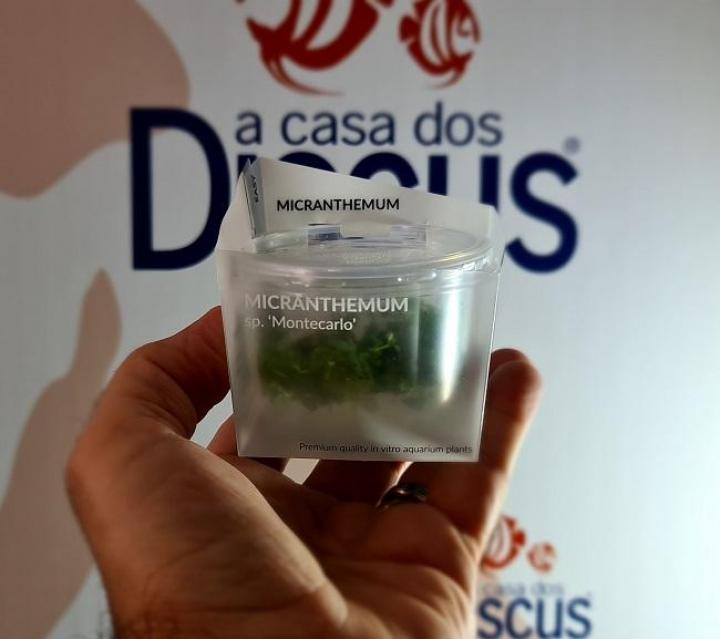 Micranthemum sp. 'Montecarlo' - In Vitro Cup